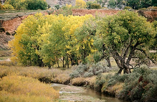 Stock Photo: 1566-0145331 Fall colors along Cheyenne river. South Dakota. USA