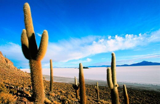 Salar de Uyuni (Uyuni salt flat). Bolivia : Stock Photo