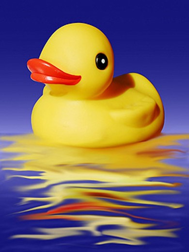 Rubber duckie : Stock Photo