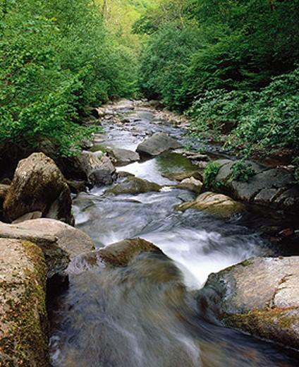 River West Lyn, Exmoor National Park. Devon. England : Stock Photo
