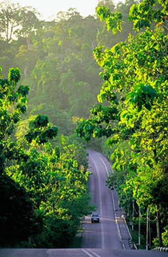 Stock Photo: 1566-0151471 Road through Langkawi forest. Malaysia