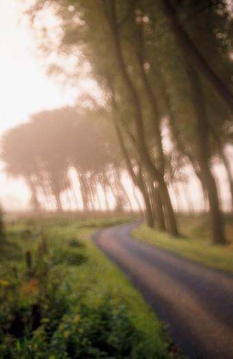 Three lined path, near Brugge. Belgium : Stock Photo