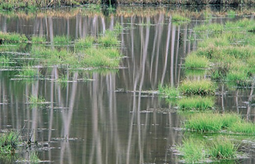 Stock Photo: 1566-0152308 Birch tree reflections in pond. Ontario, Canada