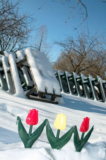 Plastic flowers in snow : Stock Photo