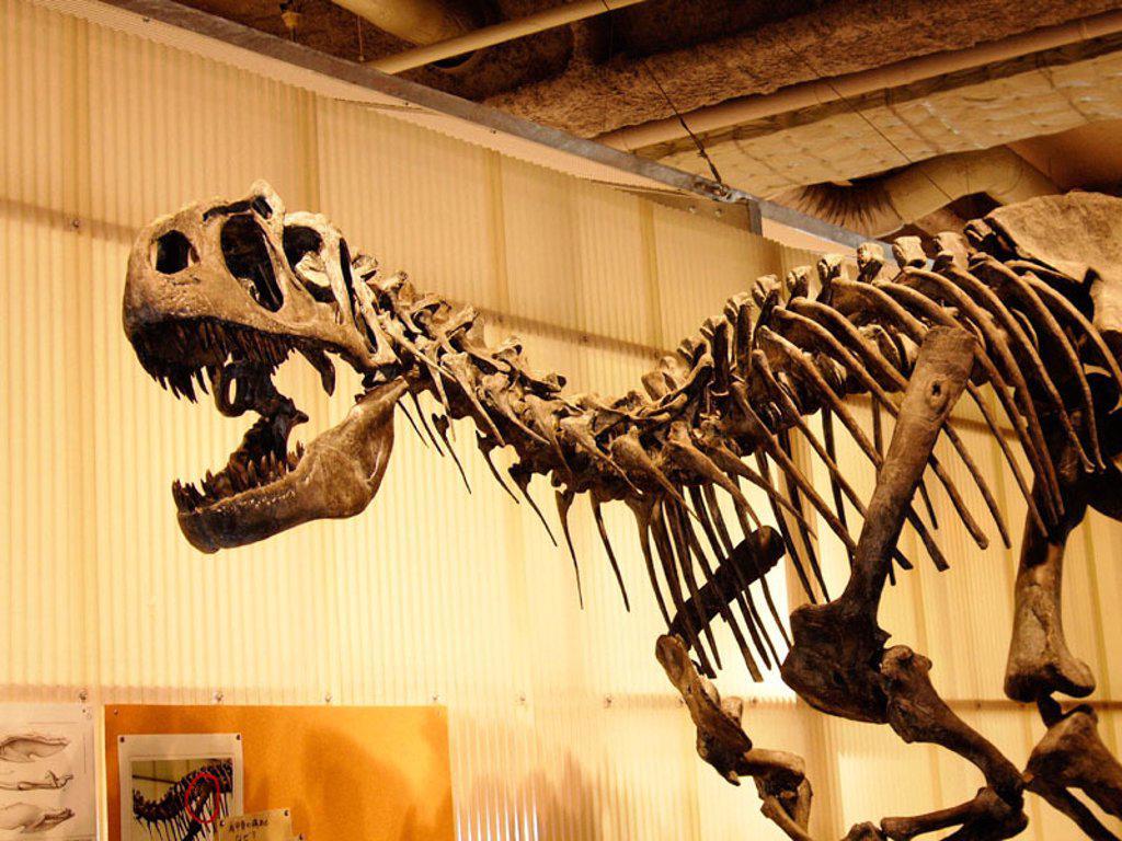 Stock Photo: 1566-0157455 Natural History Museum. Tokyo. Japan