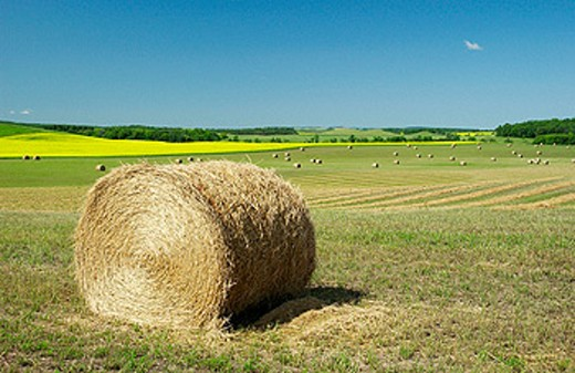 Stock Photo: 1566-0157755 Round straw bale and canola field in the rolling prairies of Southern Manitoba. Canada