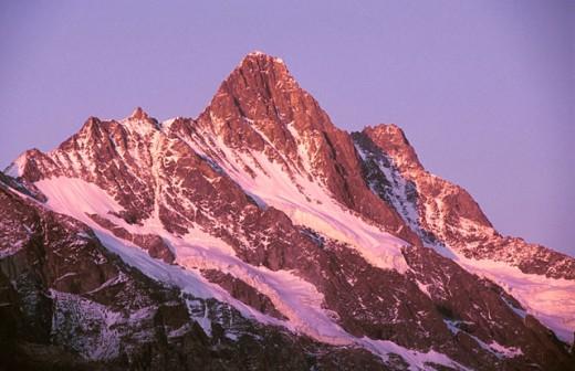 Stock Photo: 1566-0169235 Schreckhorn (4.078 meters), Berner Oberland, Switzerland