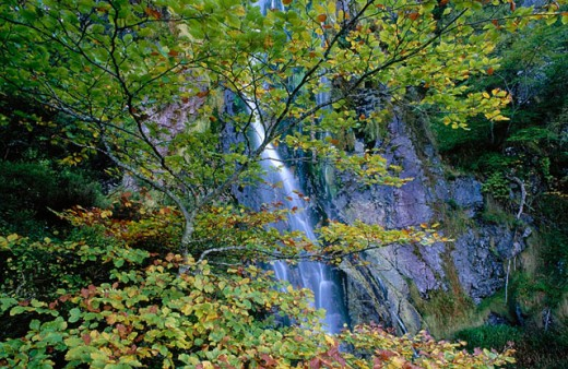 ´Tabayón del Mongayu´ waterfall. Redes Natural Park and Biosphere Reserve. Asturias. Spain : Stock Photo