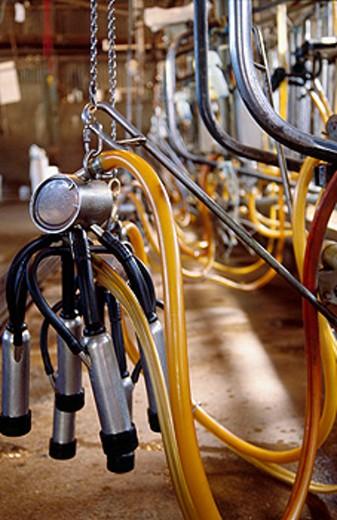 Stock Photo: 1566-0178530 Milking equipment