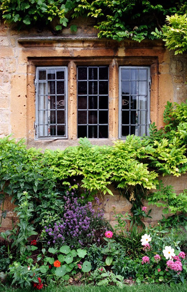 Stock Photo: 1566-0179358 Flower garden framing the wrought iron window of a stone house in Chipping Campden, in the Cotswolds region of England