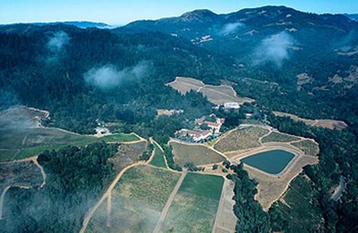 Vineyards. Napa Valley, California. USA : Stock Photo