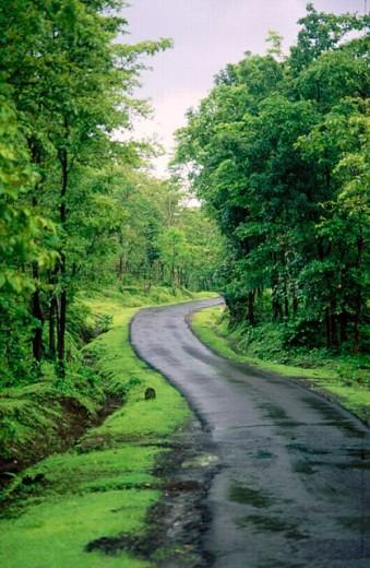Road in Mansoon. Asangaon (Pivli). Maharashtra. India. : Stock Photo