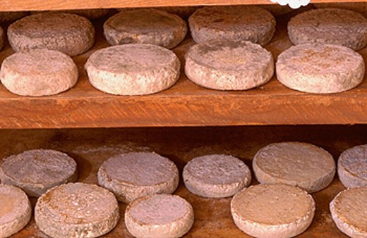 Stock Photo: 1566-0189076 Goat ´tomme´, typical cheese, at Ettore Canton farm. Pian dell´Alpe, Usseaux. Orsiera Rocciavrè Natural Park area, Piedmont, Italy