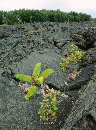 Path. Kaumana-Hilo, Big Island. Hawaii, USA : Stock Photo