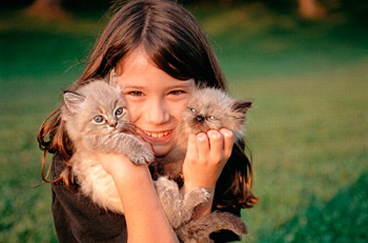 Girl with Himalayan-Persian kittens : Stock Photo