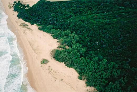 Stock Photo: 1566-0191766 Kobi Bay coastal forest. Maputaland. South Africa.