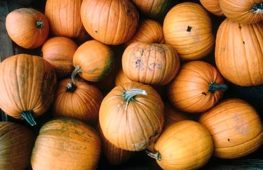 Stock Photo: 1566-0192956 Home grown pumpkins