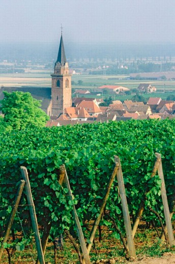 Stock Photo: 1566-0196434 Alsace. France.