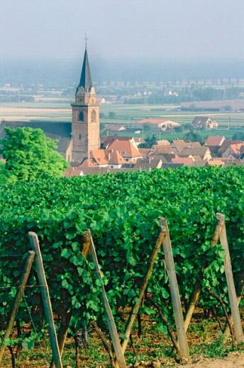 Alsace. France. : Stock Photo