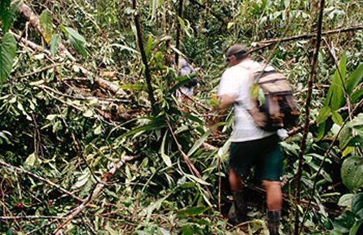 Corcovado National Park. Costa Rica. : Stock Photo