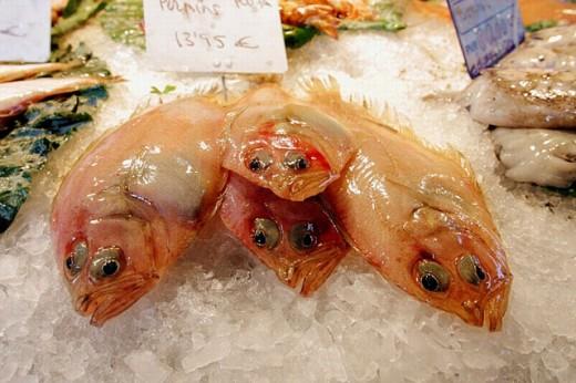 Stock Photo: 1566-0198466 Fish. Mercat de St Antoni, Barcelona. Spain
