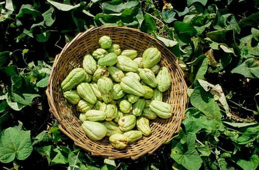 ´Chouchou´ vegetables, Mauritius. : Stock Photo
