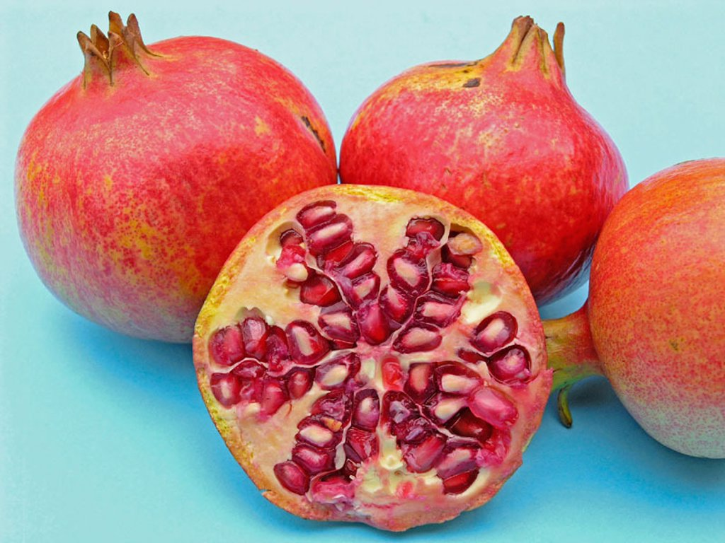 Stock Photo: 1566-0199852 Pomegranates