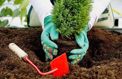 Stock Photo: 1566-0201096 Gardening tools. Transplantating fir. Greenhouse