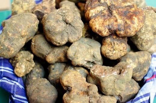 Stock Photo: 1566-0202965 Truffles. San Giovanni d´Asso. Siena province, Tuscany, Italy