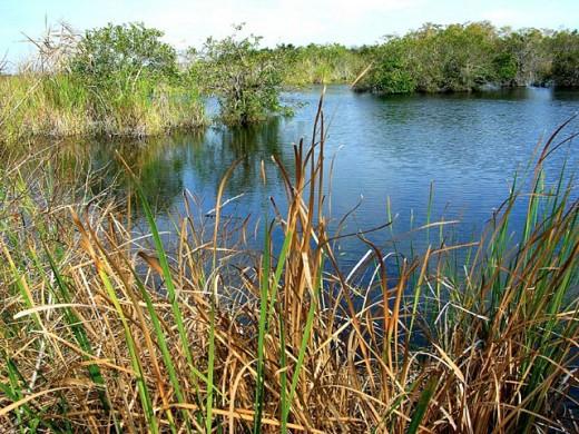 Stock Photo: 1566-0203888 Everglades National Park. Florida. USA