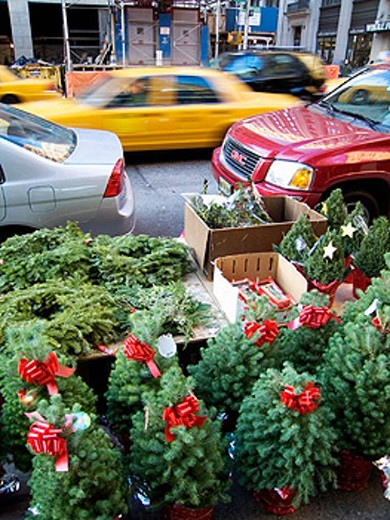 Christmas trees on sale in Manhattan. New York City, USA. : Stock Photo