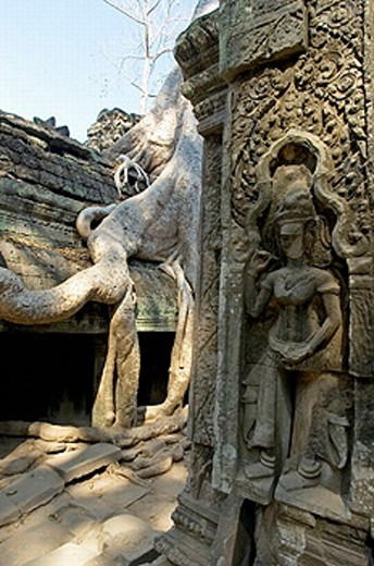 A painter. Ta Prohm temple, mid XIIth century, early XIIIth century AD. Buddhist. Temples of Angkor. Siem Reap area. Kingdom of Cambodia. : Stock Photo