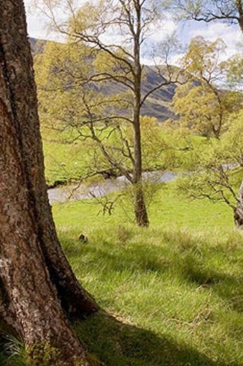 Sheep pastures by the River Clova in Glen Clova. Angus, Scotland : Stock Photo