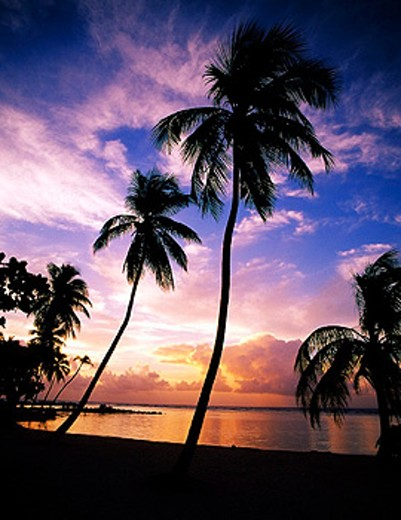 Stock Photo: 1566-0224525 Caribbean. Guadeloupe. Ste-Anne Beach, sunrise