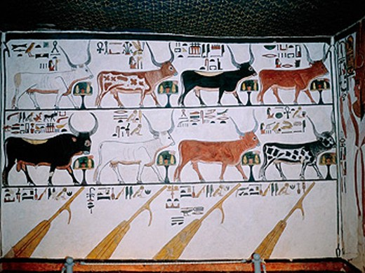 Stock Photo: 1566-0225973 Painted cows on a wall frescoe in queen Nefertai grave. Deir-el-Bahari. Queens valley. Nile west bank. Luxor. Egypt