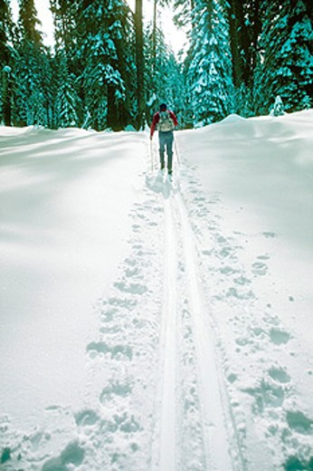 Cross country skier. Yosemite National Park. California. USA : Stock Photo