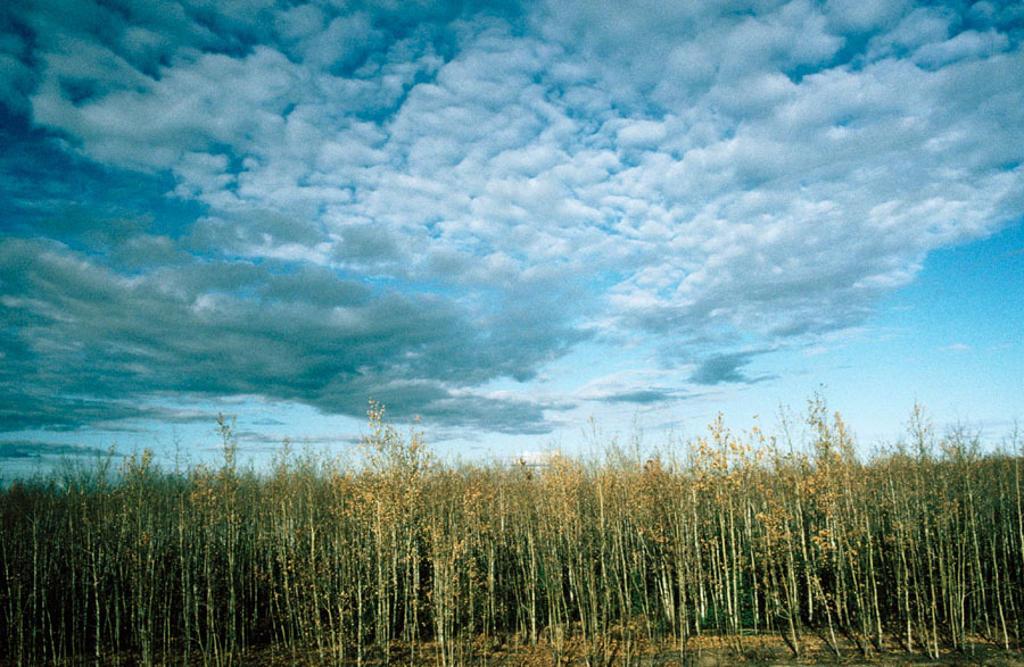Stock Photo: 1566-0234191 Denali National Park. Alaska, USA