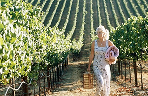 Napa, Sonoma Valley. California, USA : Stock Photo