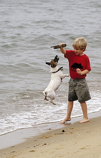 Boy and his dog at the beach : Stock Photo