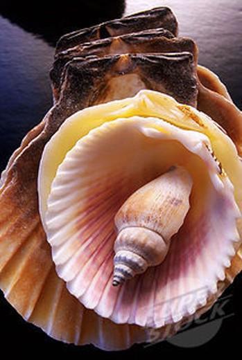 Seashells : Stock Photo