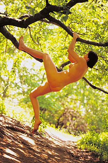 Stock Photo: 1566-035476 Naked woman climbing tree