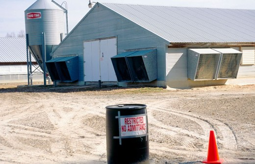 Chicken houses. Delaware. Became very restrictive after avian flu : Stock Photo