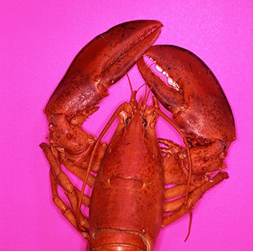 Stock Photo: 1566-050979 Boiled american lobster