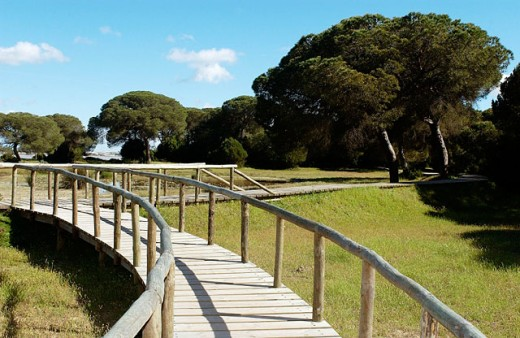 Footbridge. Doñana National Park. Huelva province. Spain : Stock Photo