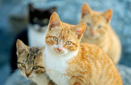 Cats. Getxo. Euskadi, Spain : Stock Photo