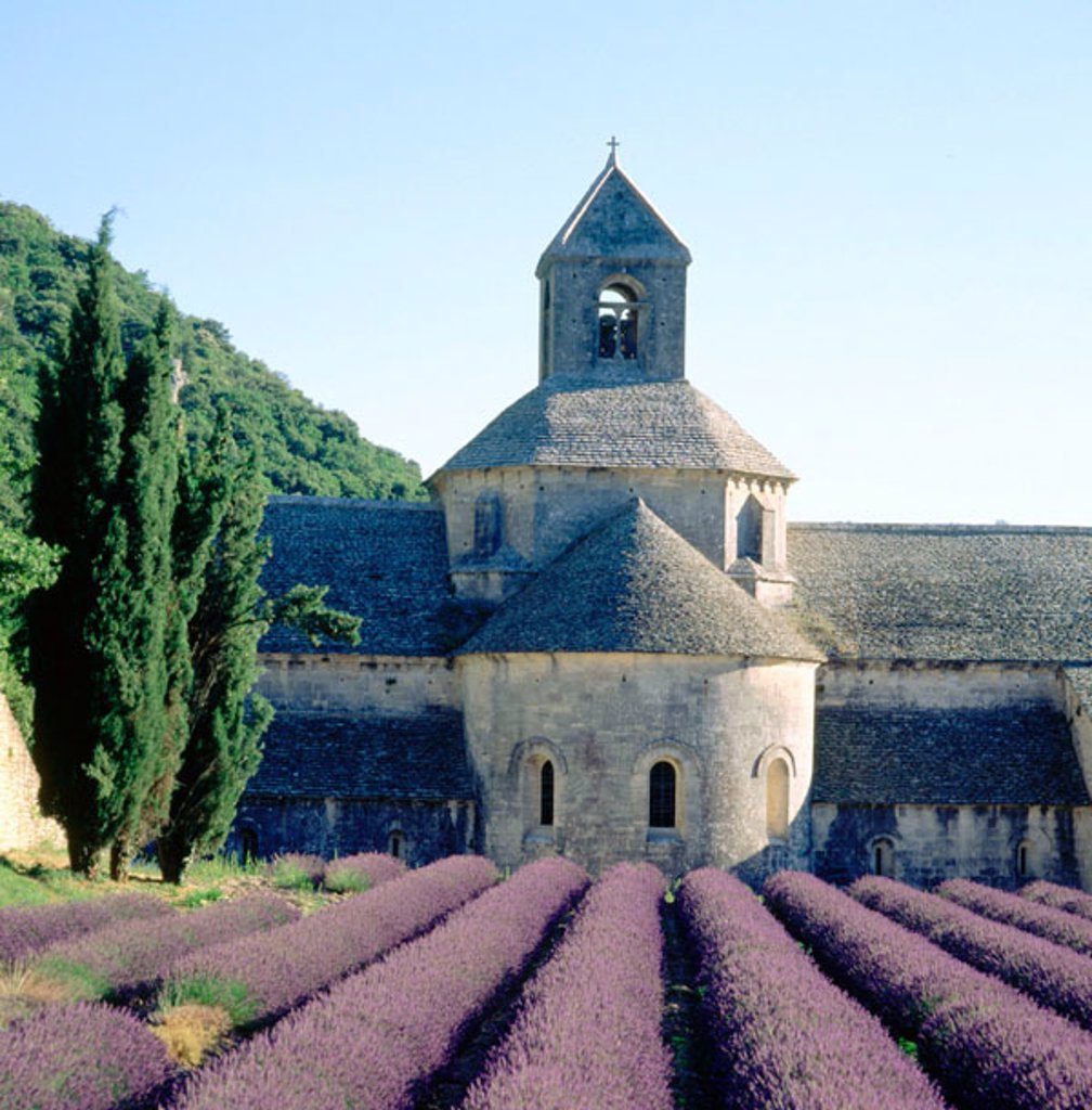 Abbey of Notre-Dame de Sénanque and lavender field. Provence. France : Stock Photo