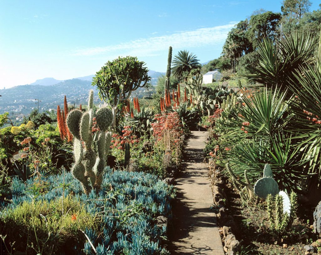 Botanical Garden. Funchal. Madeira Island. Portugal : Stock Photo