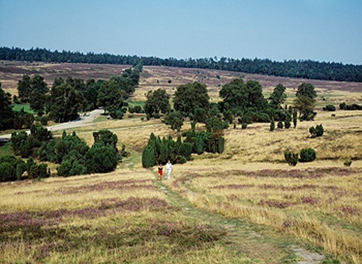 Germany, Nature reserve Lüneburg Heath, Lower Saxony, heath, moorland, young couple walking : Stock Photo