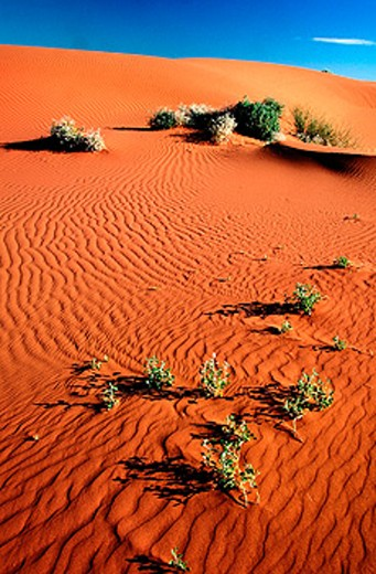 Stock Photo: 1566-079923 Sand dunes. Strzelecki Creek. South Australia. Australia
