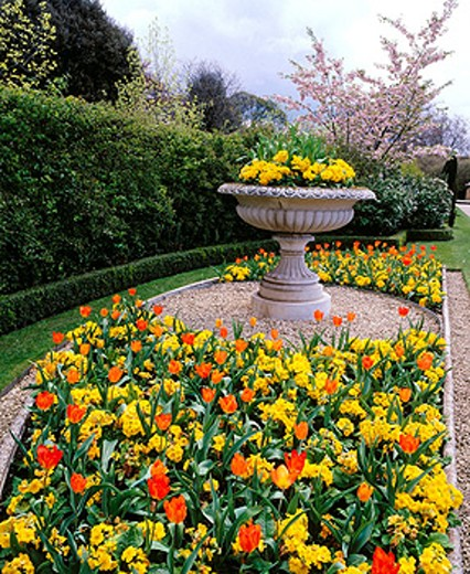 Spring flowers in the Regents Park gardens. London. England. UK : Stock Photo